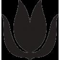Цветок лотос