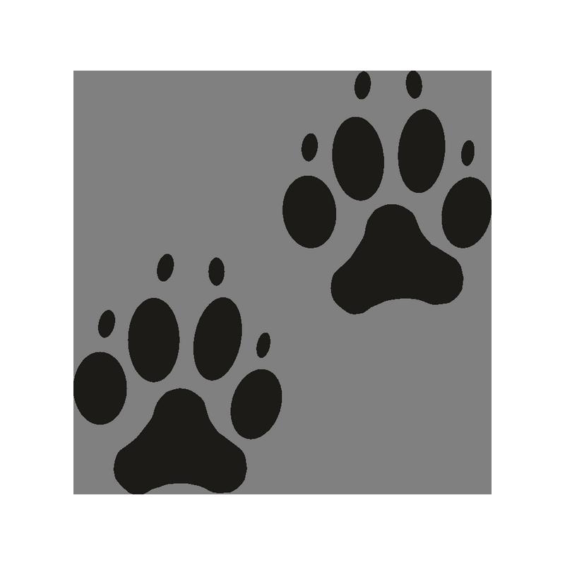 Картинка лапки собачьи