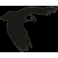 Орел 31