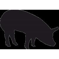 Свинья 1