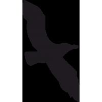 Птица в Полете 7