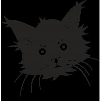 Мордочка усатого Котенка