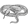 Змея питон