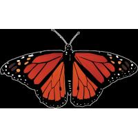 Бабочка черно-красного цвета