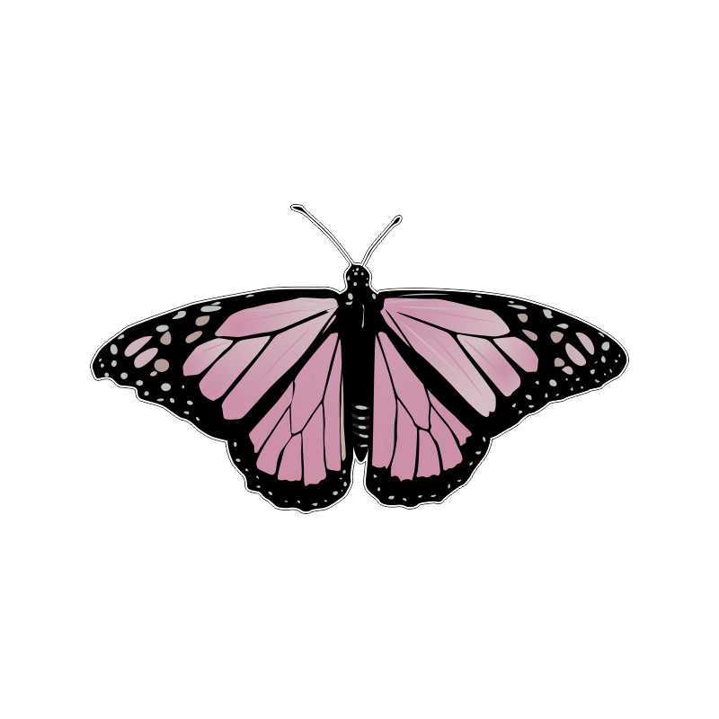 бабочка розового цвета