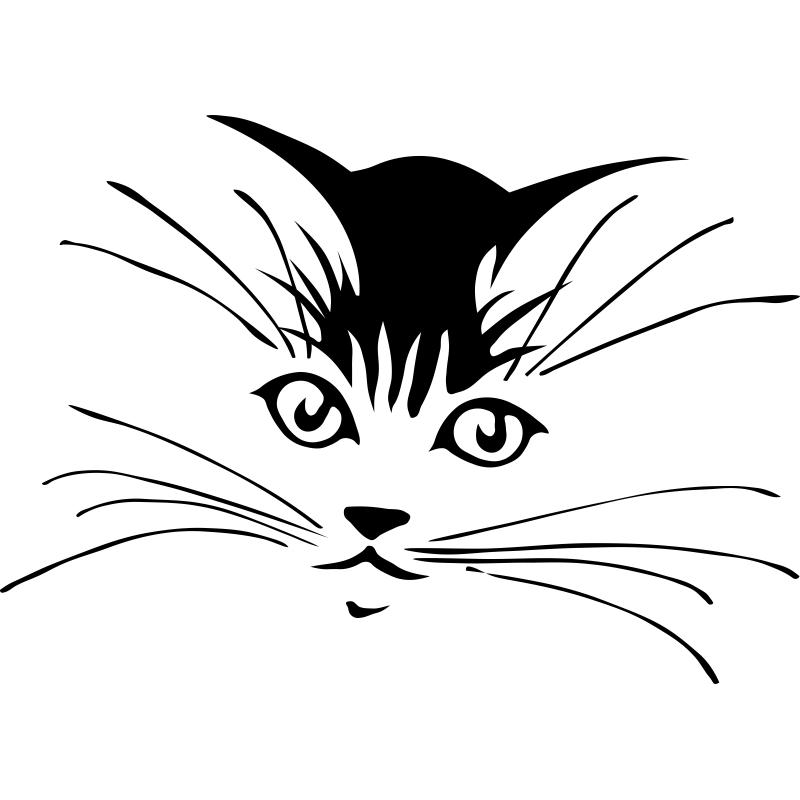 эскизы тату кошек смешные фото пряные