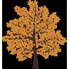 Дерево с желтыми листьями