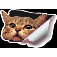 Кот из бака