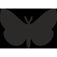 Бабочка 33